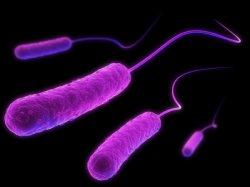 Философия и микробы | Биография Николы Теслы